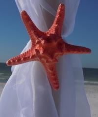 Coral Starfish Image